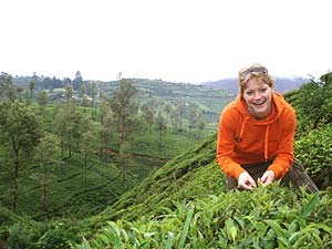 Woman picking up tea in Sri Lanka