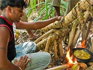 Man cooking in the forest