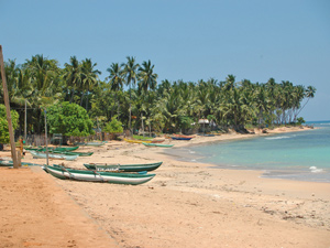 Boats and palm trees on the beach