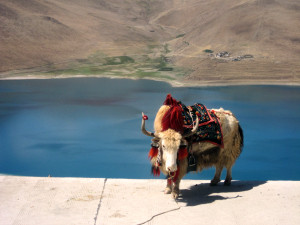 Travel to Gyantse