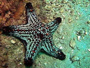 Starfish on the sea bed in Costa Rica