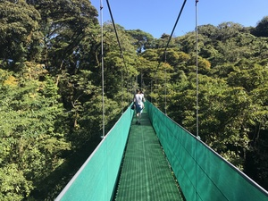 Staff walking over hanging bridge through the sunny jungle on Monteverde exursion