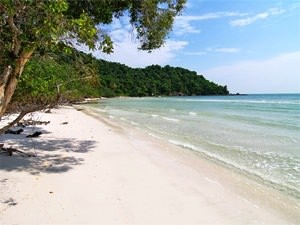 White sand beach with trees