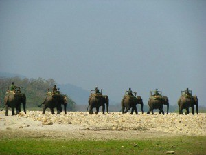 locals riding elephants over field in chitwan park nepal
