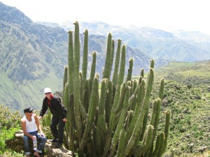 people standing by huge cactus in peru