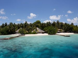 Tropical Island in the Maldives - in style accommodation