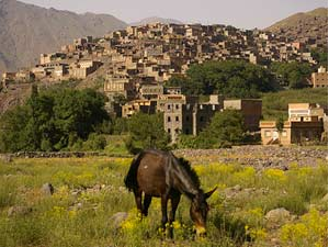 donkey in the mountains near a berber village in Morocco
