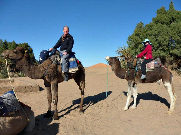 customers riding camels in desert in morocco
