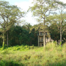 Surrounding of the homestay