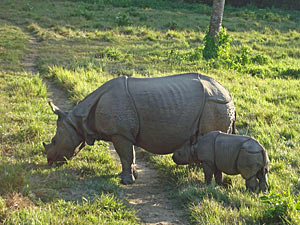 Chitwan National Park & Departure