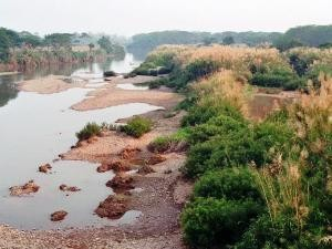 Riverbed with plants