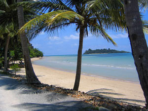 Palm trees at the beach in Ko Chang Thailand