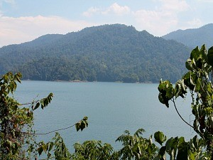 view of rainforest in malaysia