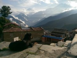 A dog taking in the mountain views in Tikot, Nepal