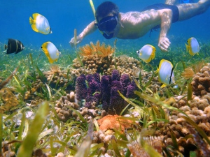 Make a Splash in Snorkelling Coves