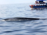 Whale spotting in Sri Lanka