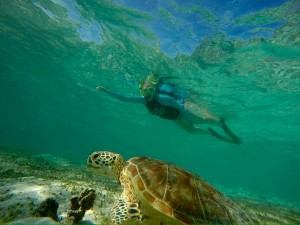 snorkeller swimming next to a turtle in Borneo