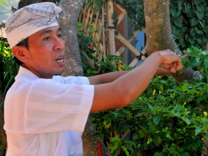 Chef explaining the medicinal properties of his vegetable crop in Bali