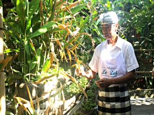 Chef showing vegetables in his veggie garden in Candidasa, Bali, Indonesia