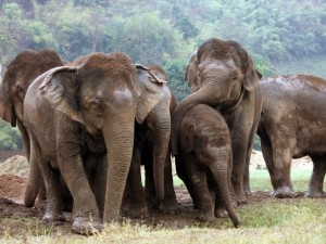 Visit to Elephant Nature Park & Departure