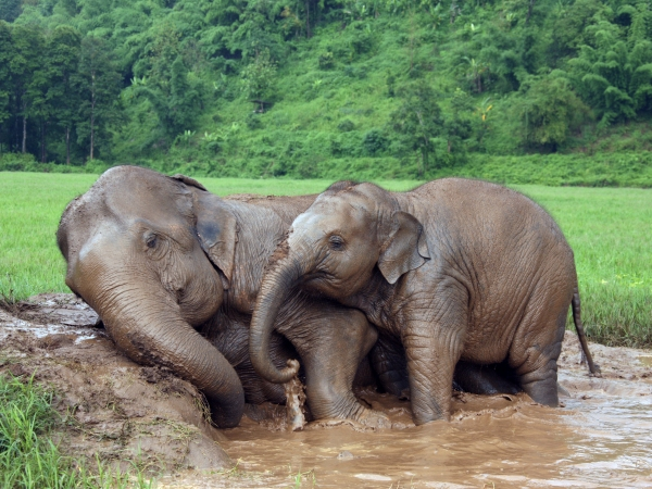 Thailand-Chiang-Mai-Elephant-Nature-Park-relaxing
