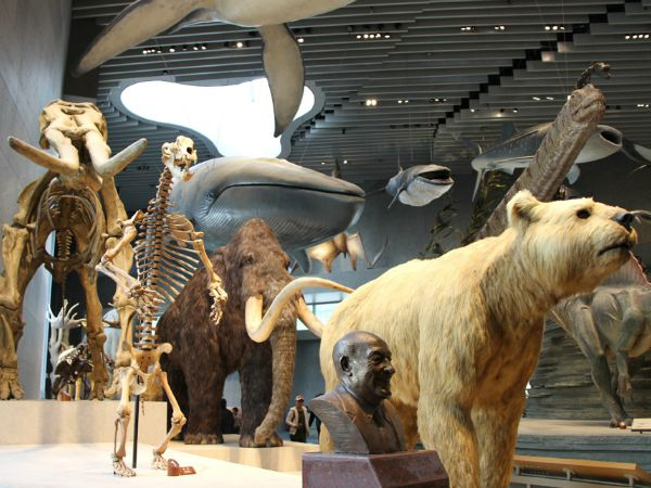 animals at the natural history museum in Shanghai