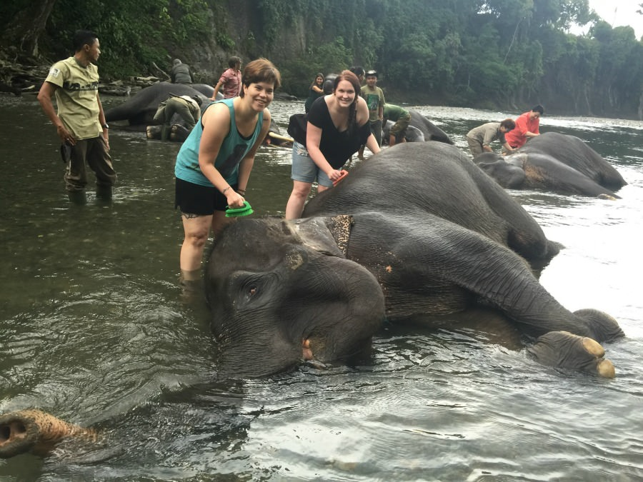 Elephants being bathed in the river in Tangkahan, Sumatra Indonesia