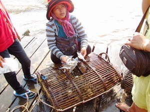 women in kep catching crabs with hat on