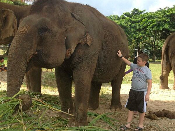 boy stroking elephant in thailand