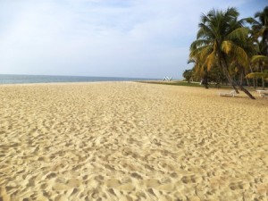 Relax on Palm-Fringed Shores