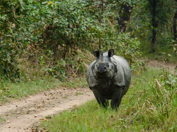 india-wildlife-rhino