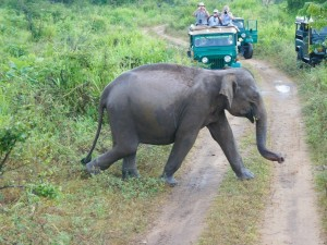 sri-lanka-national-park-wildlife-elephant-jeep