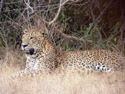 Leopards, Lakes and Royal Palaces
