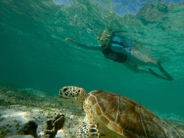 Borneo-swimming-turtle-hayley-brown