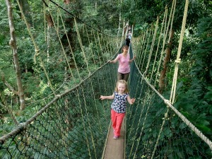 Canopy Walk and Jungle Boat