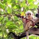 A mother and baby monkey in the Sumatran jungle