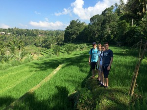 Tumbling Rice Paddies of Ubud
