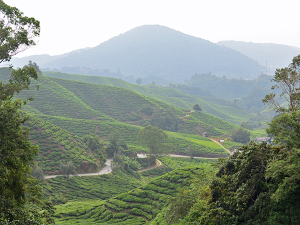 malaysia-competition-winner-camilla-philip-cameron-highlands-overview-fields