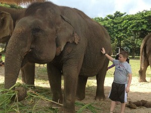 Elephant Encounters in Chiang Mai