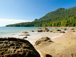 beach and rocks surrounded by rainforest