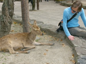 a man next to deer in Miyajima Island