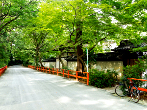 Quiet street overhung with trees