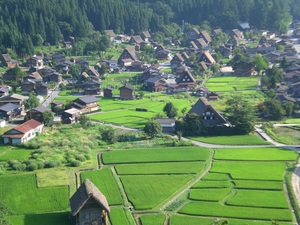 Aeriel view of a Japanese folk village with neat fields and thatched roof houses