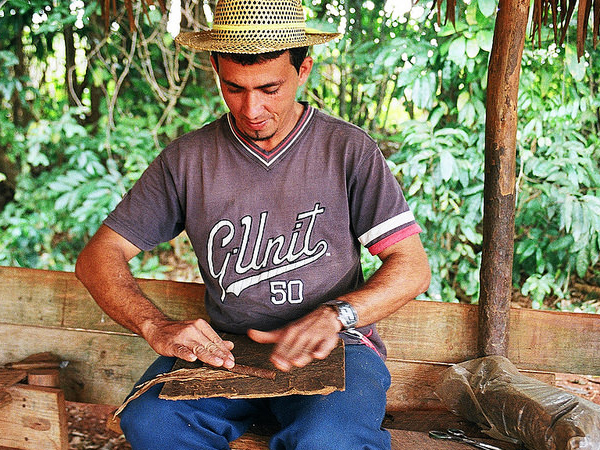 A local Cuban rolling a cigar in Vinales
