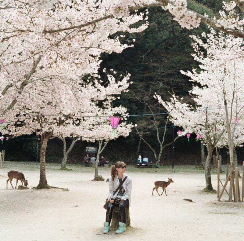 Woman sitting on chair with blossom trees and deer in background in Japan