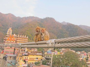 two monkeys sitting in haridwar india