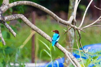 a bird on a branch in Thattekad bird sanctuary