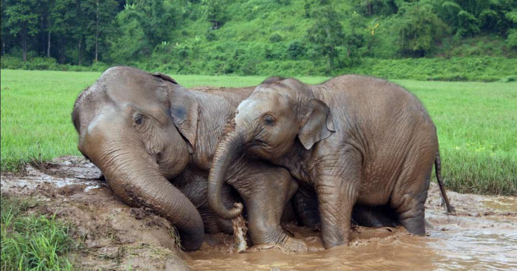 Two elephants relaxing at the Chiang Mai Elephant Nature Park