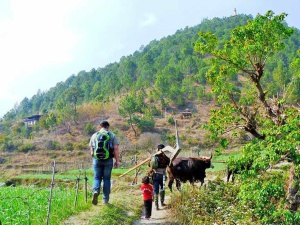 People and cow on trek in Bhutan