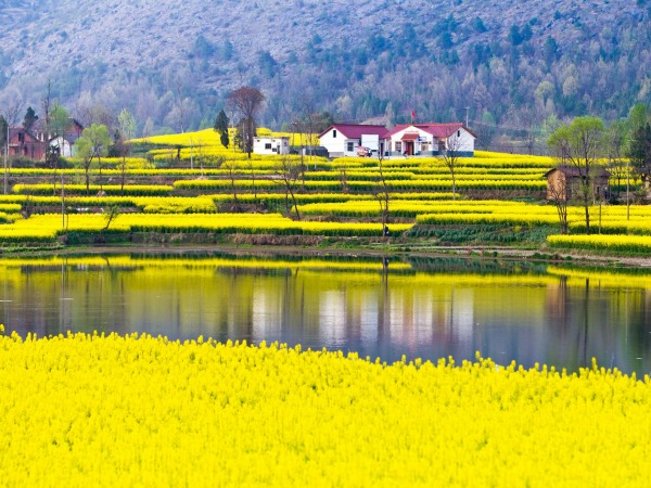 Yellow wild flowers in China